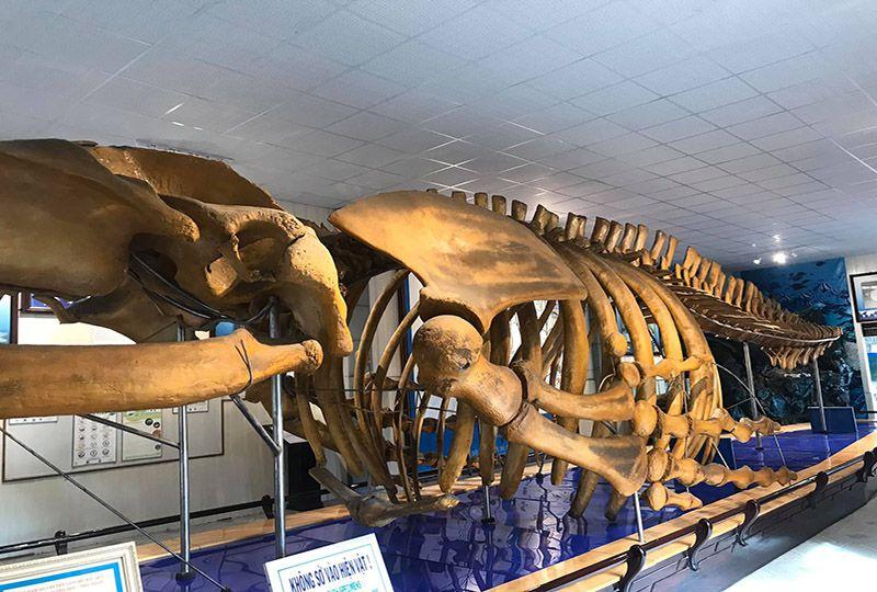 National Oceanographic Museum in Nha Trang